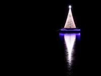 スタンレーパーク付近にあるクリスマスツリーの写真