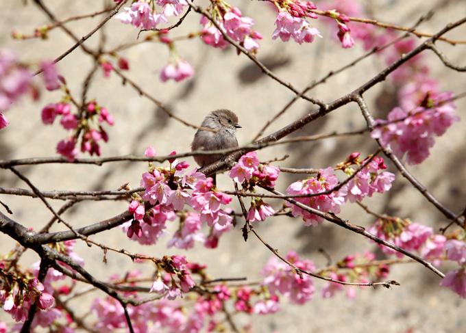 「冬にある春」