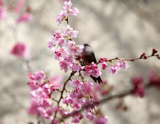 綺麗に咲く花と小鳥から既に春の陽気を感じます。