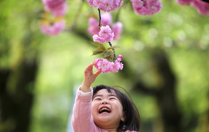 「花と華」